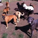 Lafayette Dog Daycare